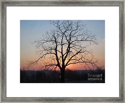 November Walnut Tree At Sunrise Framed Print