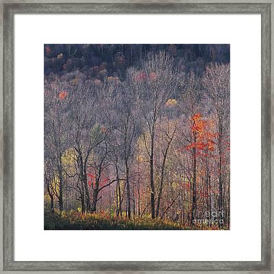 November Woods Framed Print