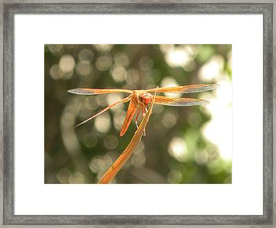 Now I See It Framed Print by John Wilson