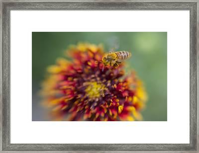 Now Rare Honey Bee 1 Framed Print