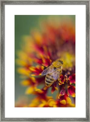 Now Rare Honey Bee 2 Framed Print