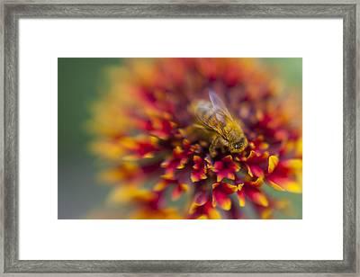 Now Rare Honey Bee 3 Framed Print