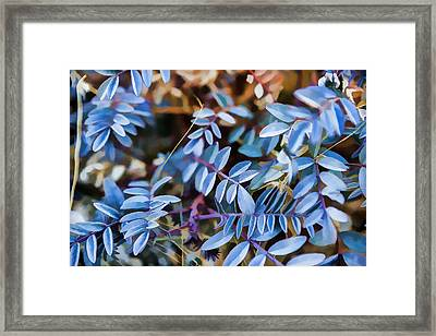 Now Thats Blue Framed Print