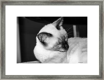 Now What Do You Want Framed Print