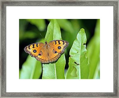 Now You See Me Framed Print by Atchayot Rattanawan