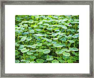 Nuanced Nasturtium Framed Print by Joe Schofield