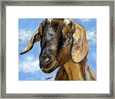 Nubian Goat Portrait Framed Print
