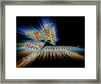 Nucleotide Exchange Factor Framed Print