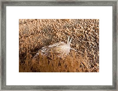 Nudibranch Framed Print by Andrew J. Martinez