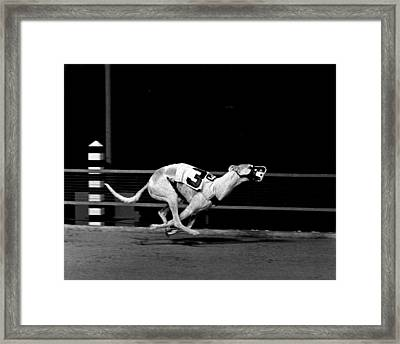 Number 3 Greyhound Running Hard Framed Print by Retro Images Archive