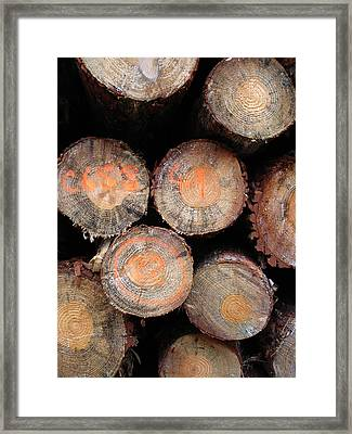Number Logs Framed Print by Michel Mata
