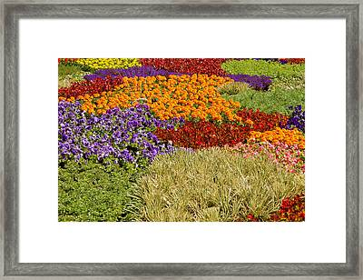 Framed Print featuring the photograph Nursery Potted Garden Plants Arrangement by JPLDesigns