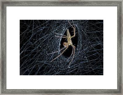 Nursery Web Spider On Its Nursery Web Framed Print