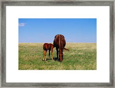 Nurturance Framed Print by Jeff Swan