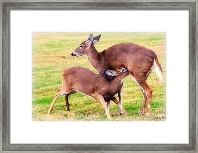 Nurturing Nature Framed Print