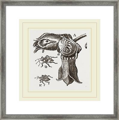 Nut And Apple-tree Weevils Framed Print by Litz Collection
