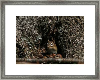 Nut Therapy  Framed Print