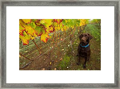 Nute Watches The Vines Framed Print