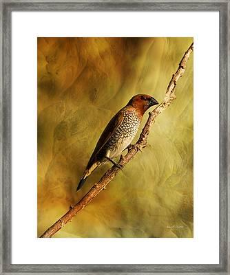 Nutmeg Mannikin Aka Spice Finch Framed Print by Angela A Stanton