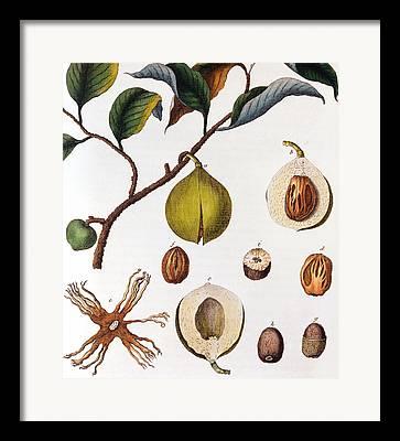 Food Source Framed Prints