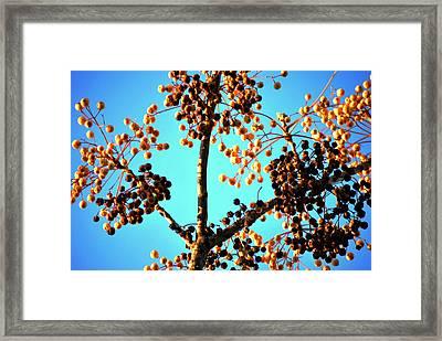 Nuts And Berries Framed Print by Matt Harang
