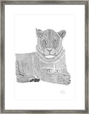 Nyah The Lioness Framed Print by Patricia Hiltz