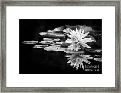 Nymphaea Maria Framed Print by Tim Gainey