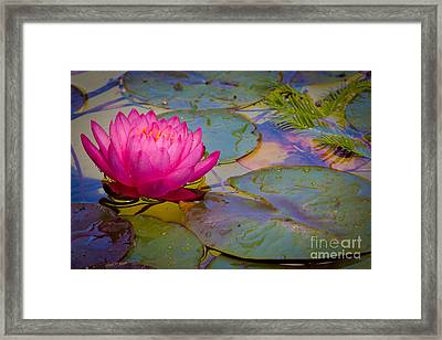 Nymphaeaceae Framed Print by Inge Johnsson