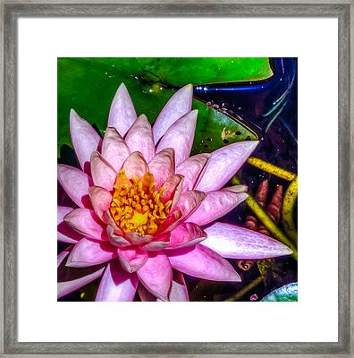 Framed Print featuring the photograph Nymphaeaceae by Rob Sellers