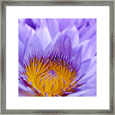Nymphea Framed Print by Delphimages Photo Creations
