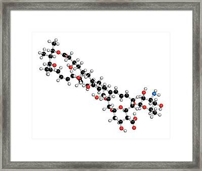 Nystatin Antifungal Drug Molecule Framed Print