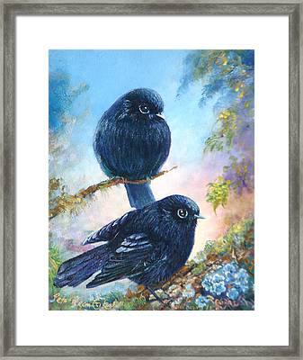 Nz Black Robins Framed Print by Peter Jean Caley