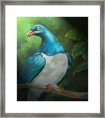 Nz Native Pigeon Kereru Framed Print by Patricia Howitt