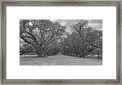 Oak Alley 3 Monochrome Framed Print by Steve Harrington