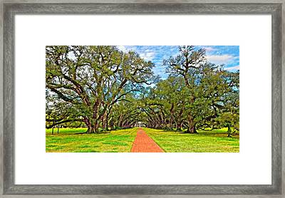 Oak Alley 3 Oil Framed Print by Steve Harrington