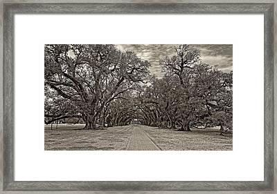 Oak Alley 3 Sepia Framed Print by Steve Harrington