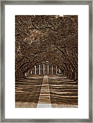 Oak Alley Bw Framed Print