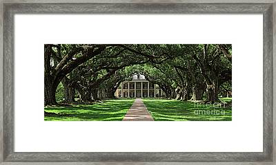 Oak Alley Framed Print