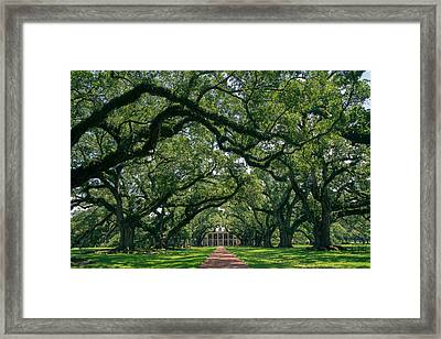 Oak Alley Plantation Framed Print by Peter Verdnik