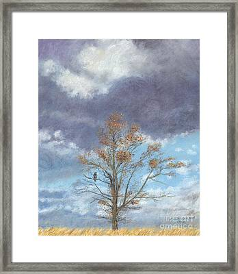 Oak And Clouds Framed Print by Jymme Golden