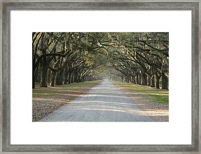 Framed Print featuring the photograph Oak Avenue by Bradford Martin
