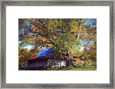 Oak Barn And Oak Tree In Autumn Framed Print by Reid Callaway