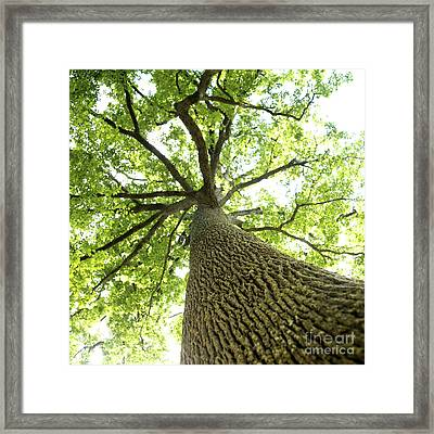 Oak Framed Print by Bernard Jaubert