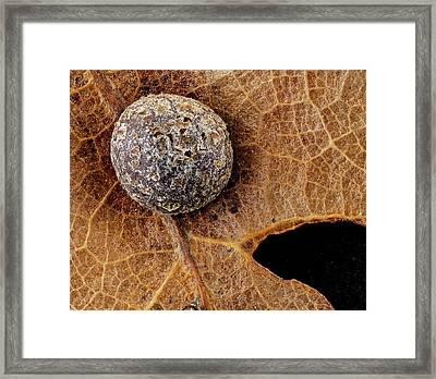 Oak Gall Framed Print by Us Geological Survey