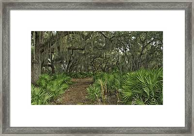 Oak Hammock. Split Oak Forest. Framed Print