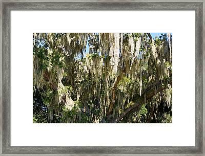 Oak Impression Framed Print