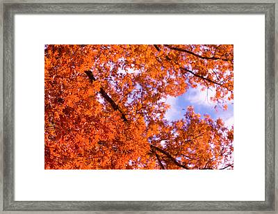 Framed Print featuring the photograph Oak In Evening Sun by Denise Beverly