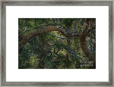 Oak Jungle Framed Print