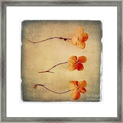 Oak Leaf Hydrangea Framed Print by Elena Nosyreva