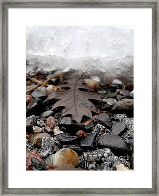 Oak Leaf On A Winter's Day Framed Print by Steven Valkenberg